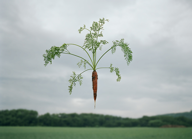 The vegetables which float 2-2
